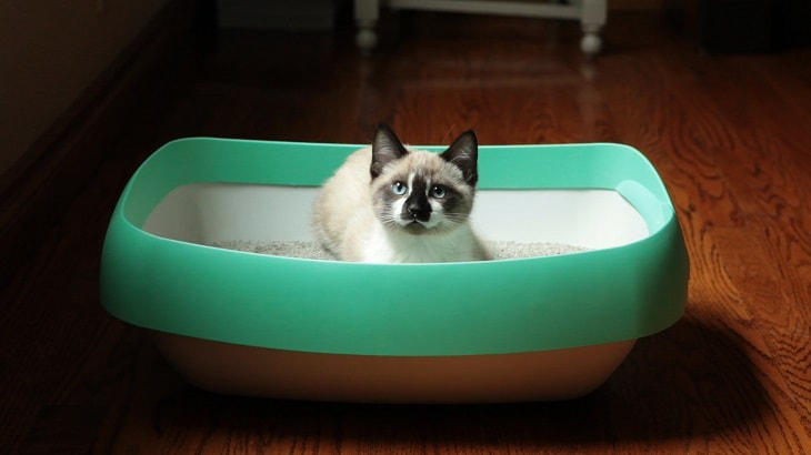 Tips To Keep The Litter Box Clean For Your Pet