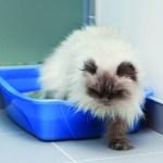 A Cat in a Cat Litter Box
