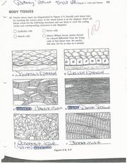 Tissues Of The Body Worksheet | www.pixshark.com - Images ...