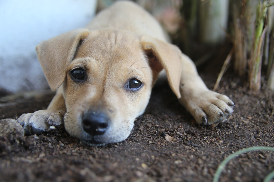 NY Pet Shops Accused of Selling Sick Puppies