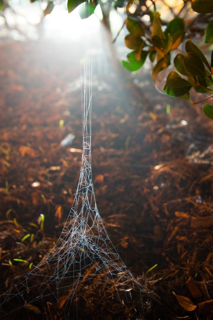 Spider Eiffel s