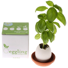 Egglings images