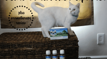 Venta Aromatherapy and Review Update! #ad