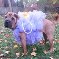 The Best Homemade Dog Halloween Costumes - Crafty Morning