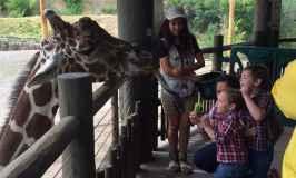 Visiting Hogle Zoo