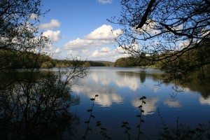 Picture of Vachery Pond Cranleigh