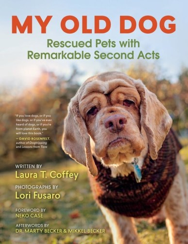 adopt older dogs