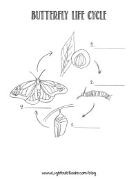 The Life Cycle of a Butterfly | Create WebQuest