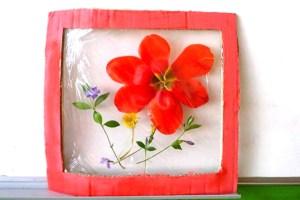 tablou din flori naturale presate - mac