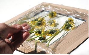 tablou din flori naturale presate - pasul 4