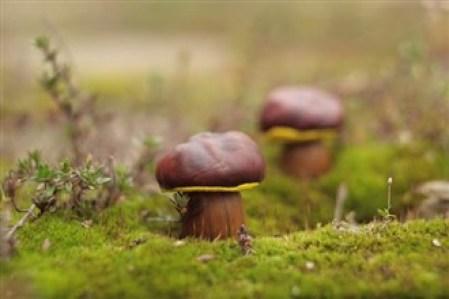 ciuperci din ghinde si castane - Ce minunatii poti crea din multimea de comori ale toamnei
