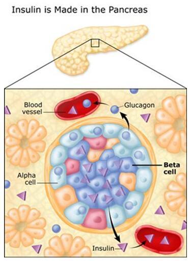 Insulin Signaling Pathway - Creative Diagnostics