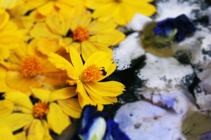 photography_05honeylyngalang_720x720
