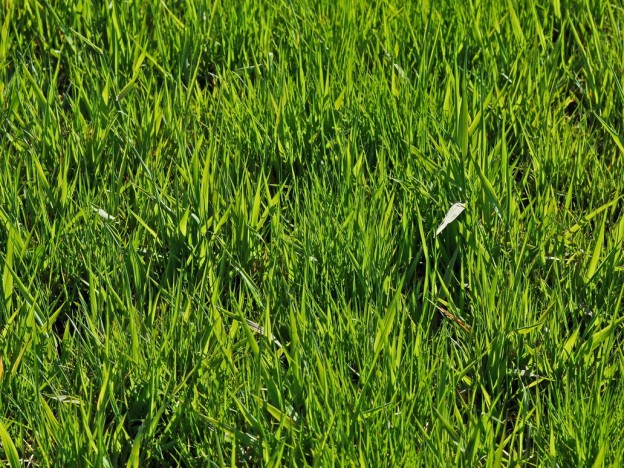 Amazing 3d Wallpapers Download 65 Free High Resolution Grass Textures Creatives Wall