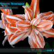 timelpase of flowers