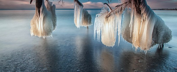 Frozen trees on Lake Ontario