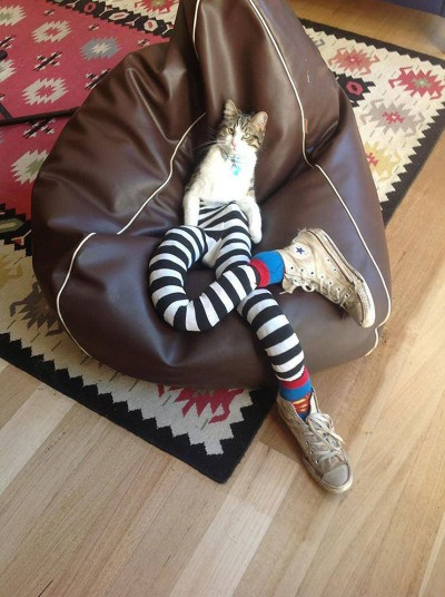 Cats_in_tights_2725506k