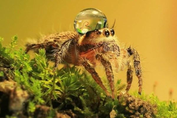 spiderswaterdrops06