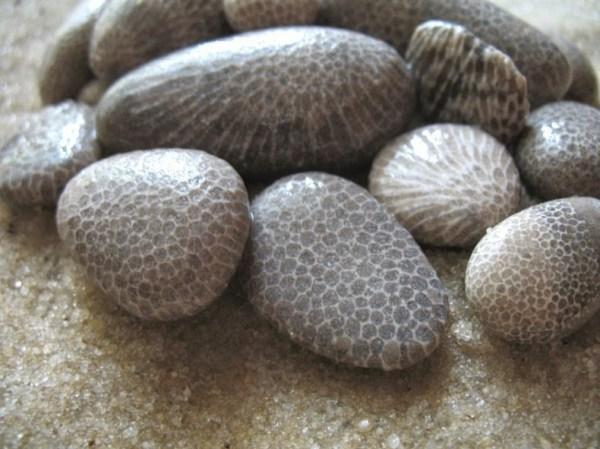 petoskey-stones-3[2]
