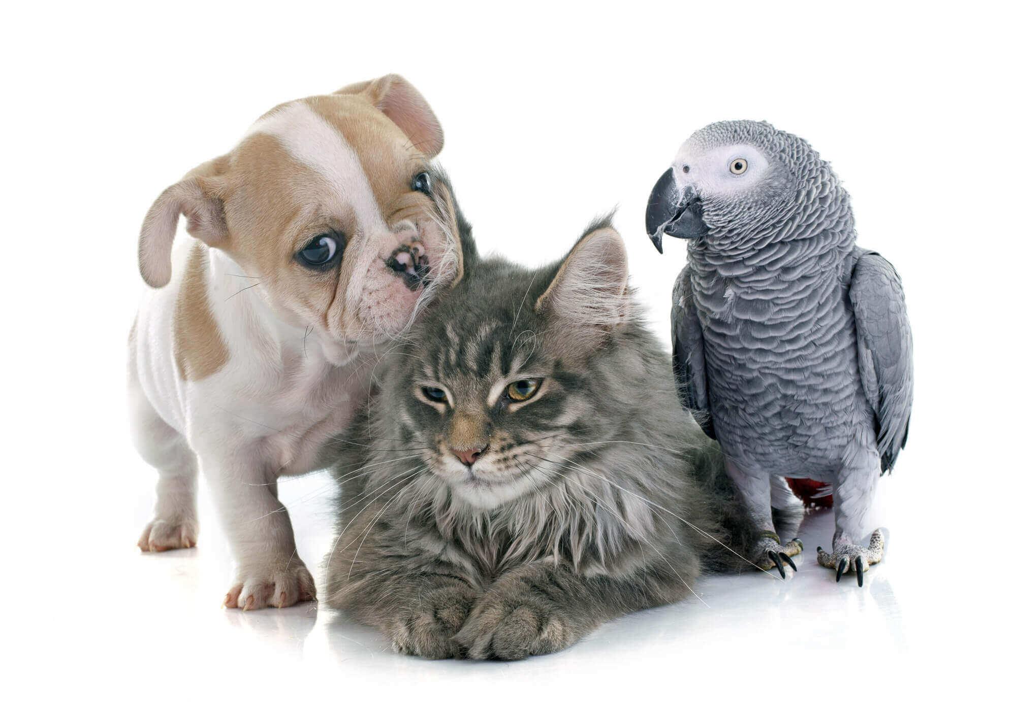Wallpaper Perritos 3d Veterinarian Salem Veterinary Services Salem Ma All