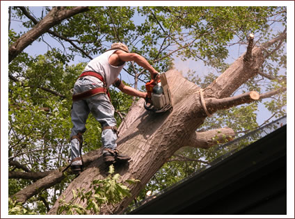 Tree Removal 11