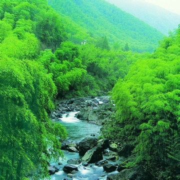 green bamboo and drift clean water