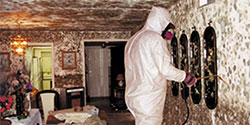 Mold Cleaning Services