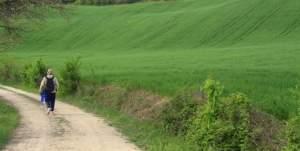Foto Sentiero di Francesco