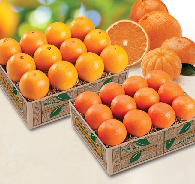Navel and Tangelo Oranges Cross Creek Grove