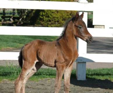 2011 Rucellaa Filly