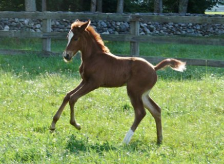 Winala Filly