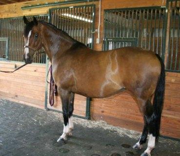 Czars Precious Lacey, 2009