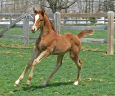 Wynona Filly