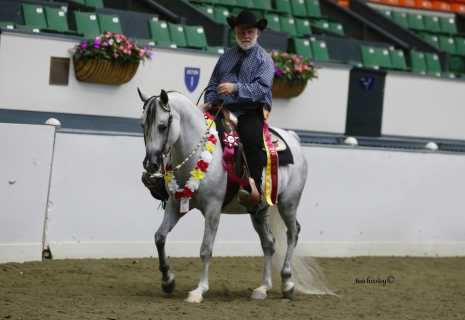 CA Charisa-Western Pleasure Amateur Owned Trainedand Shown-Reserve Champion