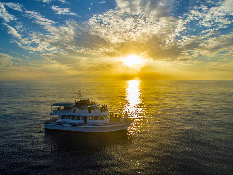 Orange Fall Wallpaper Sunset Cruises Amp Boat Rentals Newport Harbor Cruise