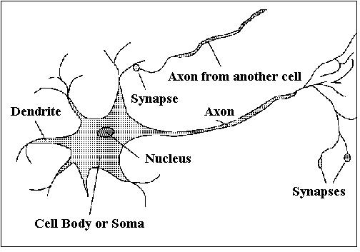 easy diagram of synapse