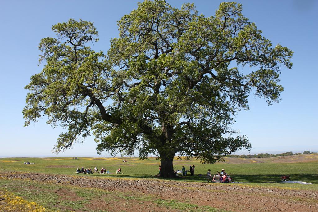 What Plants Grow Under Live Oak Trees : Non native shrubs for planting under oak trees cse