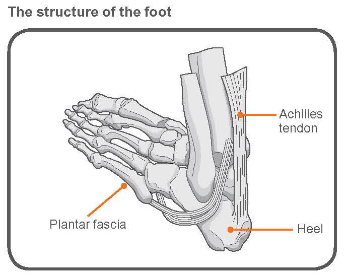 Exercise advice foot pain The Chartered Society of Physiotherapy