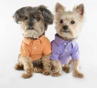 Dog fashion show - So Cute - Style Jeans