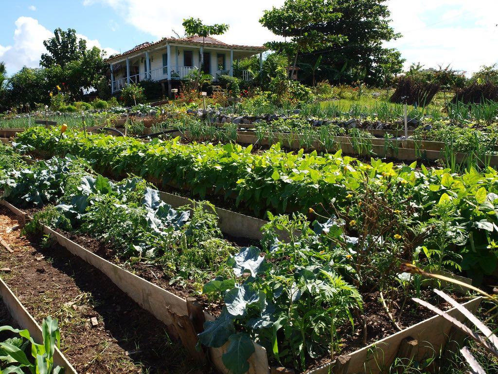 ORGANIC FARM VINALES CUBA