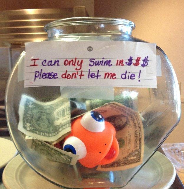 Swim in Money