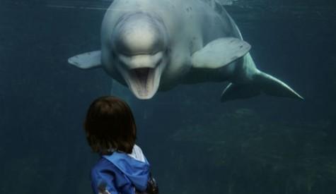 noc-the-whale-e1350947806816