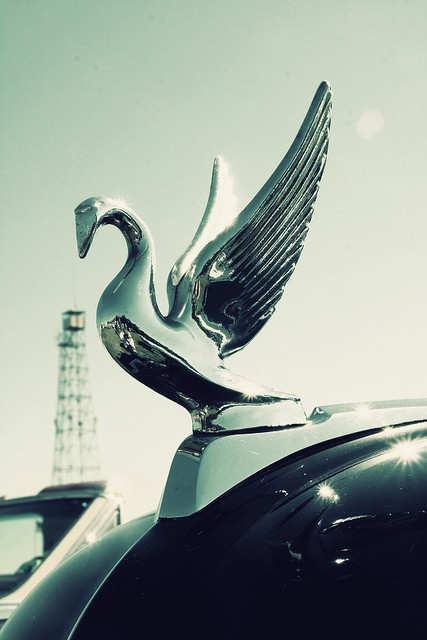 Packard swan