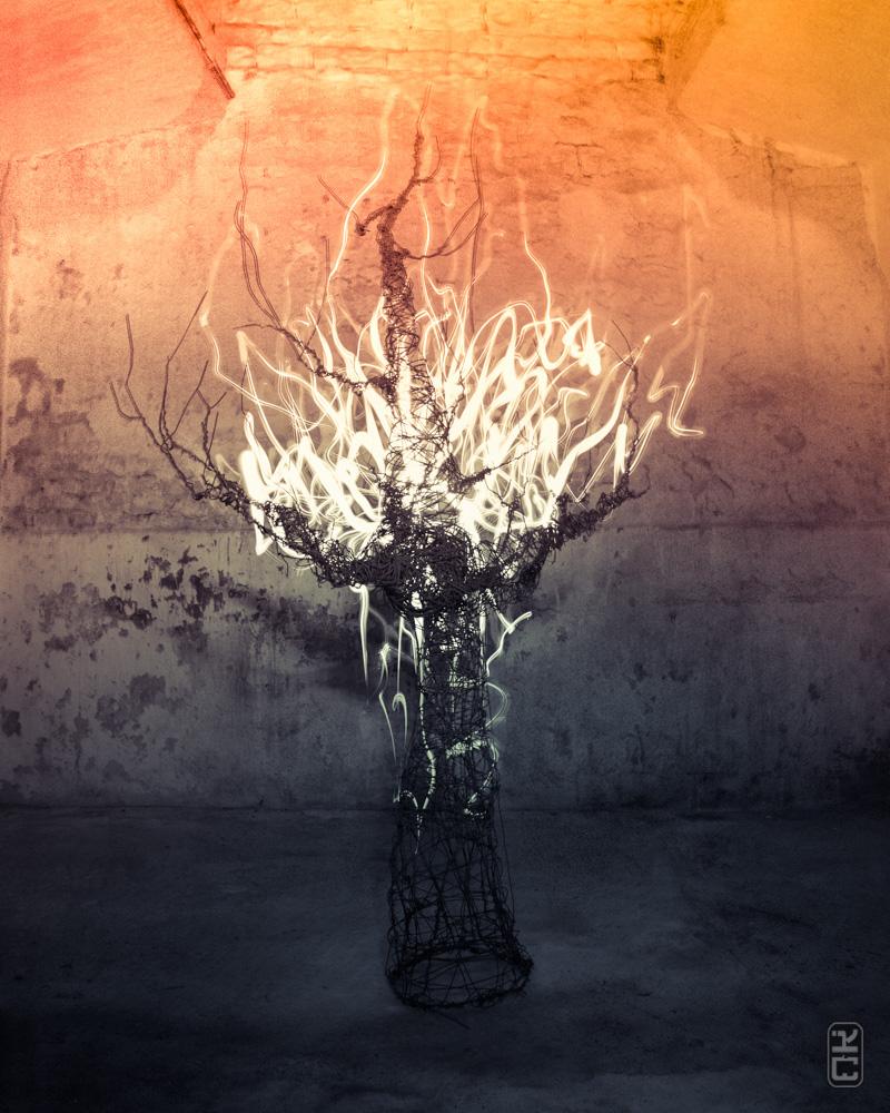 Light painting tree...