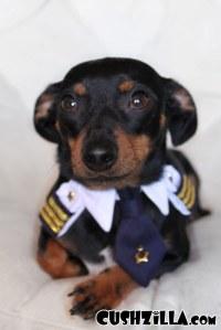 Cushzilla Captain Kitty Pilot Uniform for Cats and Dogs ...