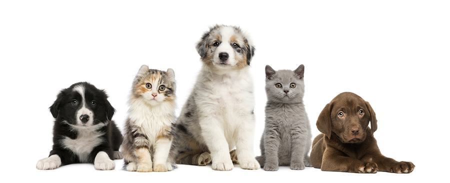 Cute Christmas Kitten Wallpaper Cute Dogs And Cats With Their Animal Look Alike Cuteness