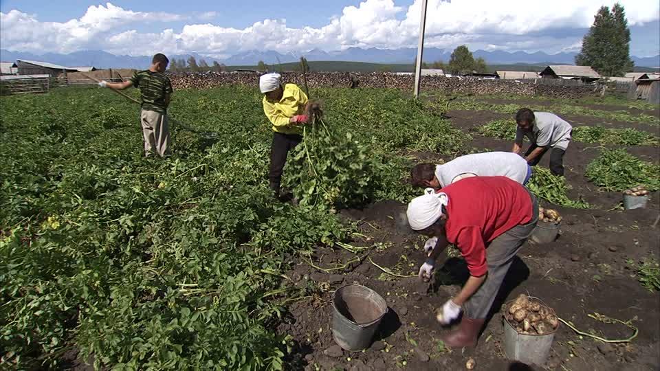 exemple de cv d agriculteur