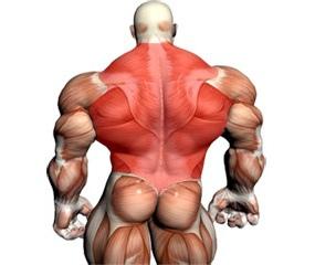 Back Training Videos