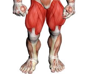 Leg Training Videos