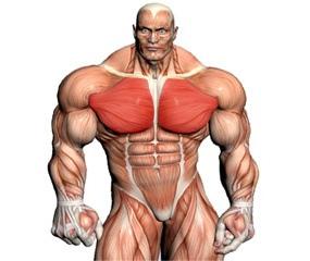 Shoulder Training Videos